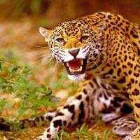Golden Triangle with Jungle Safari Tour