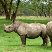 Rhinoland Tour - Assam Tour Package