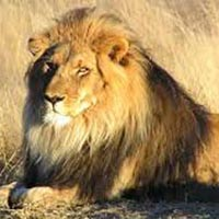 Short Escape to Gir Package