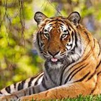 Sundarbans 2N 3D Tour