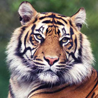 Rajasthan Tiger's Trail Tour
