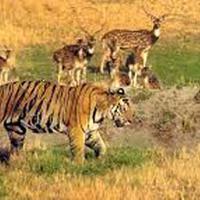 Short Escape to Bandhavgarh Tour