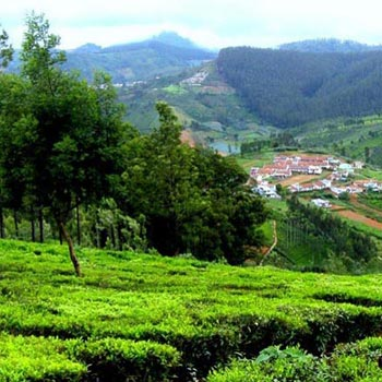 Bangalore-Ooty-Coorg  coofe plantation special Tour