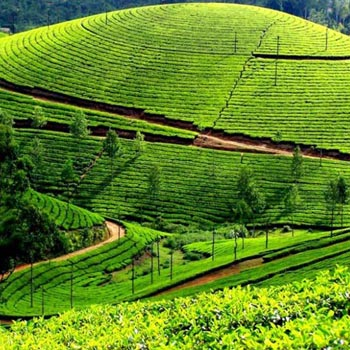 Oooty Mysore Kodaikanal Package (6 Nights / 07 Days)