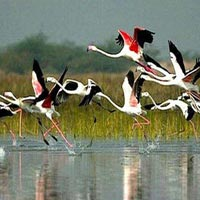 Bharatpur Weekend Tour From Delhi Tour