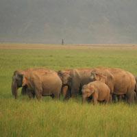 Majestic Uttarakhand Tour
