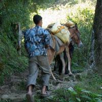 The Great Himalayan National Park Sainj Valley Trek