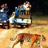 Bird Watching Tour of India with Golden Triangle