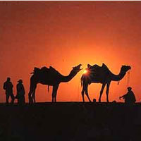 Best of Rajasthan Tour