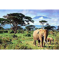 Amboseli National Park Tour