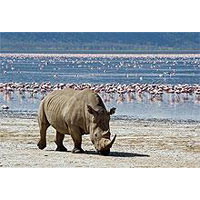 Lake Nakuru National Park Tour