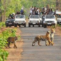 3 Jeep Safaris Tour