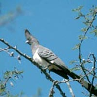 Bird Watching Tours - Sites I