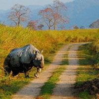 Best of Wildlife Tour in Assam 7 N / 8D