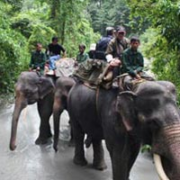 Group Tour in Manas National Park 3 N / 4 D