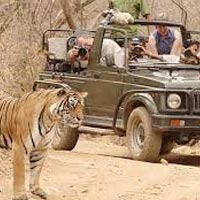 Wild Safari Rajasthan Tour