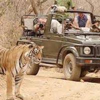 Wild Safari Rajasthan Tour