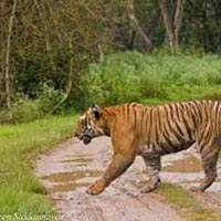 South India Tour with Wildlife Tour