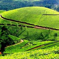 Munnar - trip to tea garden