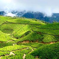 Munnar-Tea garden calling