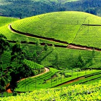 Kerala - Tea garden calling