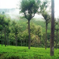 Bangalore - Mysore - Ooty - Coorg 6N/7D Tour