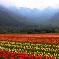 Paradise On Earth, Kashmir Package