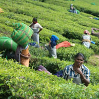 02 Nights at Munnar Hillstation in Kerala Tour