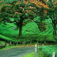 Cochin-Munnar
