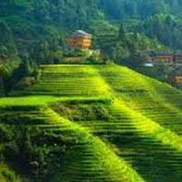 Nagaland Tribal Tour