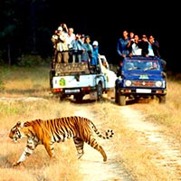Taj Mahal With Jim Corbett National Park Tour