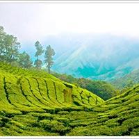 Kerala Honeymoon Tour Package 4 Nights/05 Days