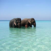 Andaman Package for 7 Nights and 8 Days (Emerald Package)