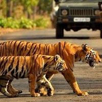 Delhi - Jim Corbett - Nainital Tour