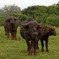 Experience Kenya Safari Tour (5 D & 4 N)