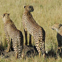 Most Popular Kenya 2013 Safari Itineraries Tour (7 D & 6 N)