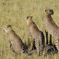 Great Rift Valley Special - Kenya Tour (5 D & 4 N )