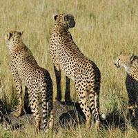 Amboseli - Aberdare - Samburu - Lake Nakuru - Maasai Mara Safari - Kenya Tour