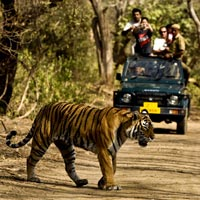 Delhi - Nanital - Lake Tour - Corbett National Park Tour - 3 Nights / 4 Days