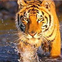 03 Days Ranthambore Tour from Jaipur