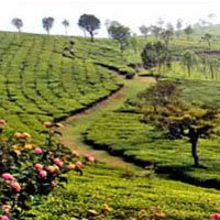 Bangalore - Mysore - Ooty - 05 Nts./06 Days Tour