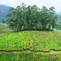 Kerala Package - 7 Nts./ 8 Days
