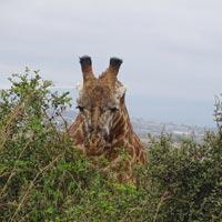 2 Night 3 Days at Amboseli National Park