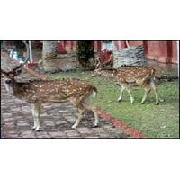 Family Package (3 N at Port Blair & Havelock Same Day)