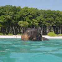 Port Blair - Havelock Island Tour