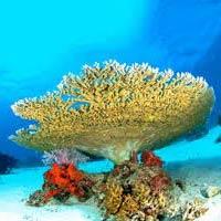Andaman Coral Island Tour