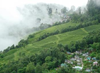 Happy Valley Tea Estate (1)