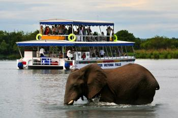 Explore The Mighty Zambezi River with a Sunset Cruise in Victoria Falls