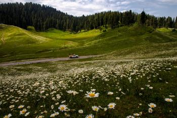 Gulmarg : the meadow  of flowers