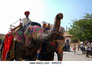 Elephant Safari Jaipur